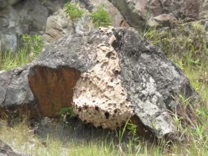hornet-nest